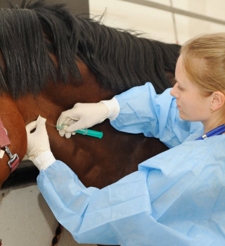 Five Tips to Increase Your Chances of Gaining Admission to Veterinary School